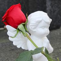 天使と薔薇